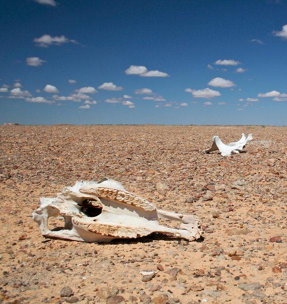 huesos en el desierto