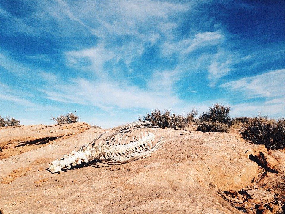 esqueleto en el desierto