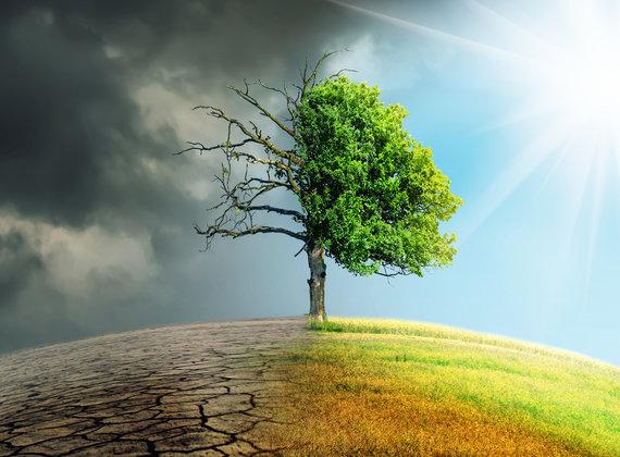 Proteger medio planeta, una propuesta para salvar la biodiversidad